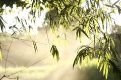 Folha de bambu Imagens de Stock Royalty Free