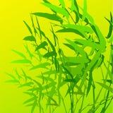 Folha de bambu Imagem de Stock Royalty Free