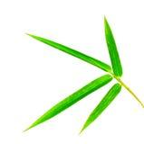Folha de bambu foto de stock