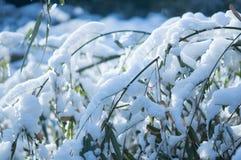 Folha de bambu congelada do ramo coberta com o fim da neve acima da vista fotos de stock