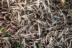 Folha de bambu seca Fotografia de Stock Royalty Free