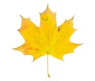 Folha de bordo amarela Foto de Stock Royalty Free