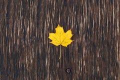 Folha de bordo amarela em uma placa de madeira Fotos de Stock Royalty Free
