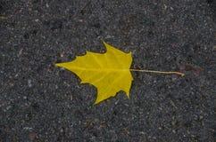 Folha de bordo amarela no asfalto foto de stock