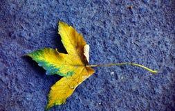 Folha de bordo amarela no asfalto azul Foto de Stock Royalty Free