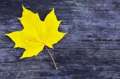Folha de bordo amarela no fundo de madeira velho Imagem de Stock