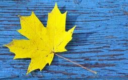 Folha de bordo amarela no fundo de madeira velho azul Fotos de Stock Royalty Free