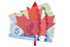 Folha de bordo canadense com dólares no fundo branco Imagem de Stock