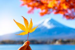 Folha de bordo com Mt Fundo de Fuji fotos de stock royalty free