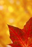 Folha de bordo do outono Imagens de Stock