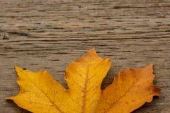 Folha de bordo dourada no fundo de madeira fotografia de stock