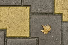 A folha de bordo encontra-se nos pavimentos Pode usar-se para o fundo imagens de stock royalty free