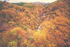 Folha de bordo japonesa no outono do ramo em Nikko Fotografia de Stock