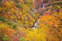 Folha de bordo japonesa no outono do ramo em Nikko Imagem de Stock Royalty Free