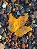 Folha de bordo na costa rochosa do Lago Superior imagem de stock