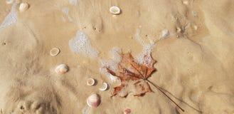 Folha de bordo na espuma do mar imagens de stock