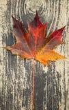 Folha de bordo outonal colorida na madeira imagem de stock