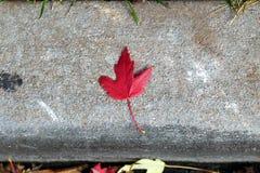 Folha de bordo vermelha em um fundo concreto fotografia de stock royalty free