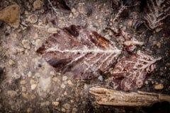 Folha de Brown com sedimento branco na água contaminada Foto de Stock Royalty Free