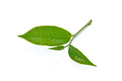 Folha de chá verde isolada no fundo branco Imagem de Stock