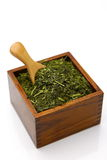 Folha de chá verde japonesa Imagens de Stock Royalty Free