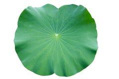 Folha de Lotus. fundo do branco do isolado. Fotos de Stock
