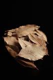 Folha de louro, erva secada Fotografia de Stock