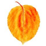 Folha de madeira amarela Fotografia de Stock Royalty Free