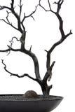 A folha de madeira da casca velha da árvore sae do preto do plantador fotografia de stock