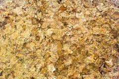 Folha de ouro Imagem de Stock