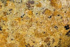 Folha de ouro Imagens de Stock