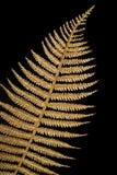Folha de ouro Fechada-acima. Fundo floral dourado Fotografia de Stock