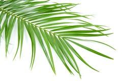 Folha de palmeira fotos de stock royalty free