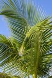 Folha de palmeira foto de stock