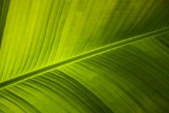 Folha de palmeira Imagem de Stock Royalty Free