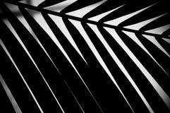 Folha de palmeira abstrata Imagens de Stock