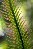 Folha de palmeira bonita Fotos de Stock Royalty Free