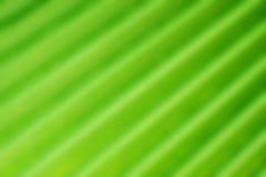 Folha de palmeira borrada abstraia o fundo Fotografia de Stock