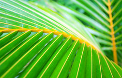 A folha de palmeira com diagonal alinha o close up Imagens de Stock
