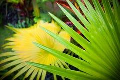 A folha de palmeira com diagonal alinha o close up Fotos de Stock Royalty Free