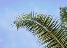 Folha de palmeira contra o céu azul com bokeh borrado imagem de stock