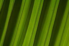 A folha de palmeira descasca a textura diagonal do fundo da inclinação Escuro - listras verdes da sombra fotografia de stock royalty free