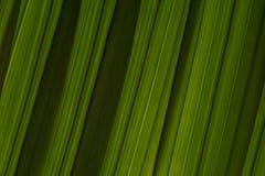 A folha de palmeira descasca a textura diagonal do fundo da inclinação Escuro - listras verdes da sombra imagens de stock
