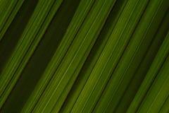 A folha de palmeira descasca a textura diagonal do fundo da inclinação Escuro - listras verdes da sombra fotos de stock royalty free