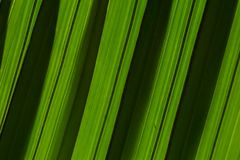 A folha de palmeira descasca a textura diagonal do fundo da inclinação Escuro - listras verdes da sombra foto de stock royalty free
