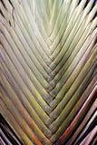Folha de palmeira do fundo da foto Imagem de Stock