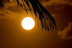 Folha de palmeira e por do sol fotografia de stock royalty free