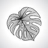 Folha de palmeira macro preta isolada ilustração stock