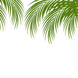 A folha de palmeira mostra em silhueta o fundo Folhas tropicais Imagem de Stock