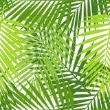 A folha de palmeira mostra em silhueta o teste padrão sem emenda Folhas tropicais Imagens de Stock